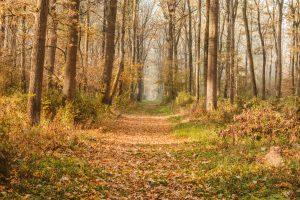 Gemenci-erdő őszi kirándulás az Impulzív Magazin oldalán