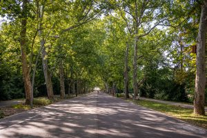 kirándulás utazás úti cél Szeged Impulzív Magazin